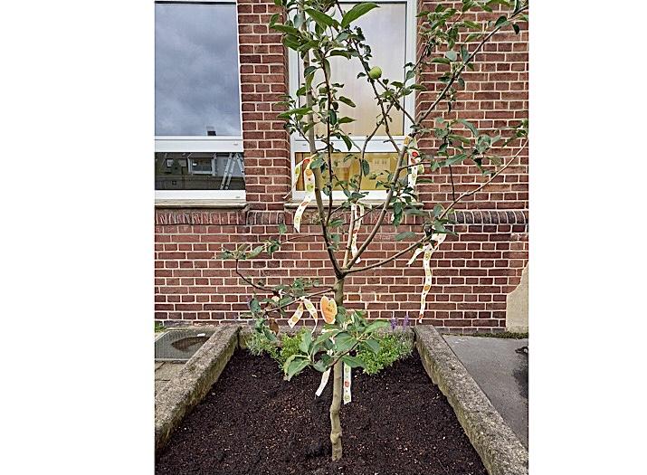 Ein Apfelbaum für unseren Schulhof!